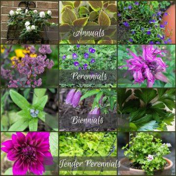 Plant Life Cycles - gardenmatter.com