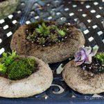 Planted Hypertufa Containers ~ Freeform Hypertufa Planters ~ gardenmatter.com