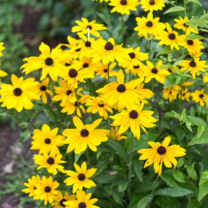 Fun and Interesting Plants that Self Seed