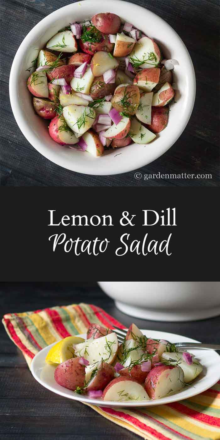 A fresh and tasty potato salad recipe with no mayo? You have to try this one. Made with red potatoes that have just the right texture combined with fresh lemon juice and dill. Get ready to add this to your summer favorite. ~gardenmatter.com
