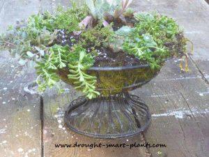 wire-fruit-basket-planter-drought smart
