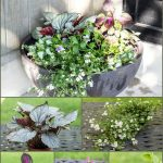 Favorite Shade Loving Plants collage ~ gardenmatter.com