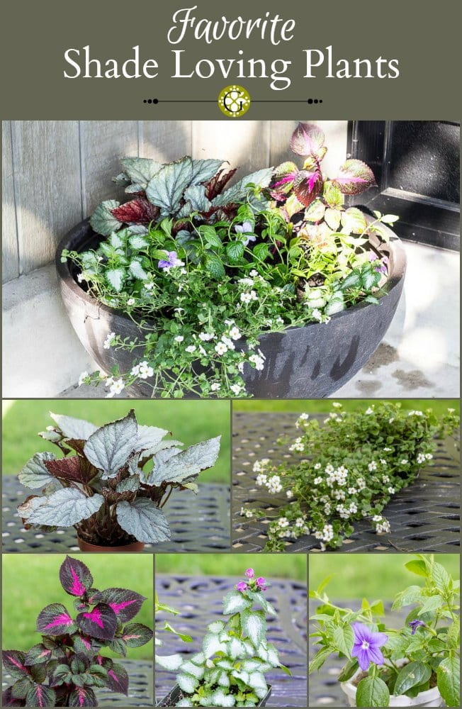 Learn tips and ideas for a how to create a planter full of shade loving plants for your front porch or other shady spot in your landscape.