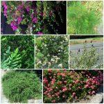 Same Plant Different Zone -gardenmatter