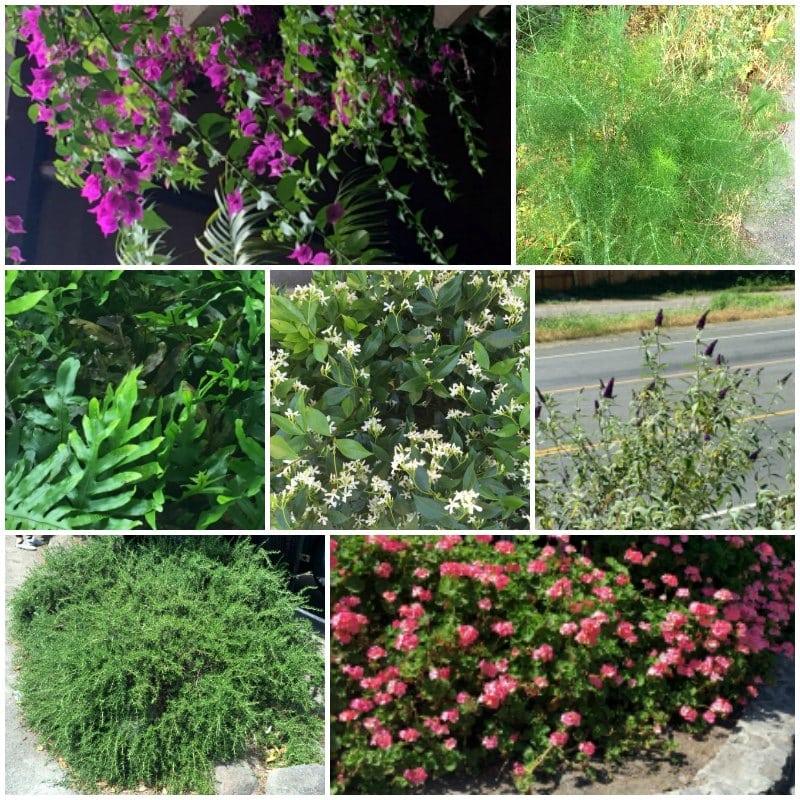 Same Plant Different Hardiness Zones