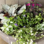 Shady Planter on Porch ~ Favorite Shady Plants ~ gardenmatter.com