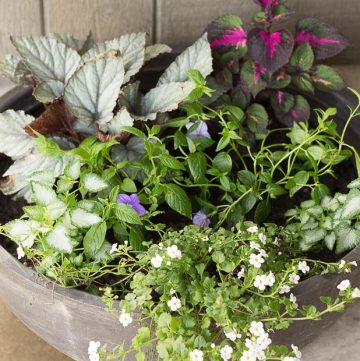 Shady Planter on Porch ~ Favorite Shady Plants ~ gardenmatter.com