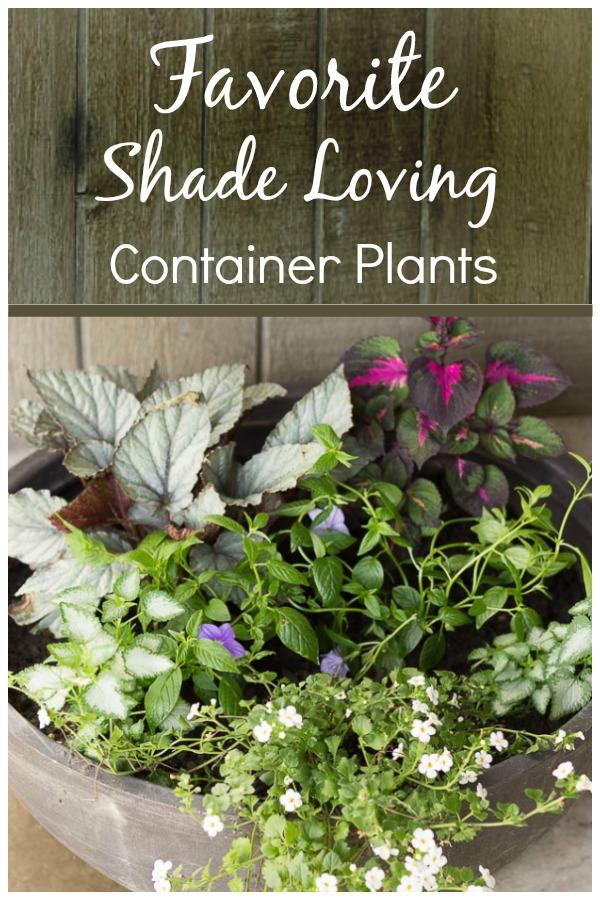 shade loving planter