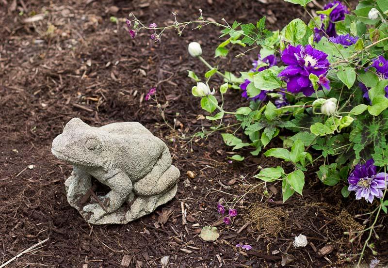 青蛙~铅看~栀子花