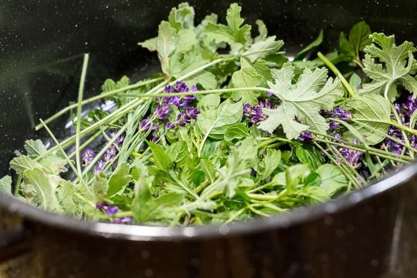 Herbs in bottom of pot ~ How to Make Hydrosols ~ gardenmatter.com