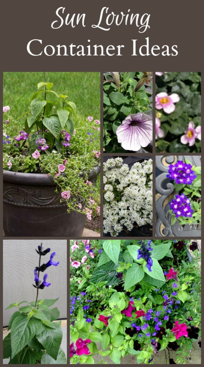 Full sun planter ideas - Container gardens for sun ...