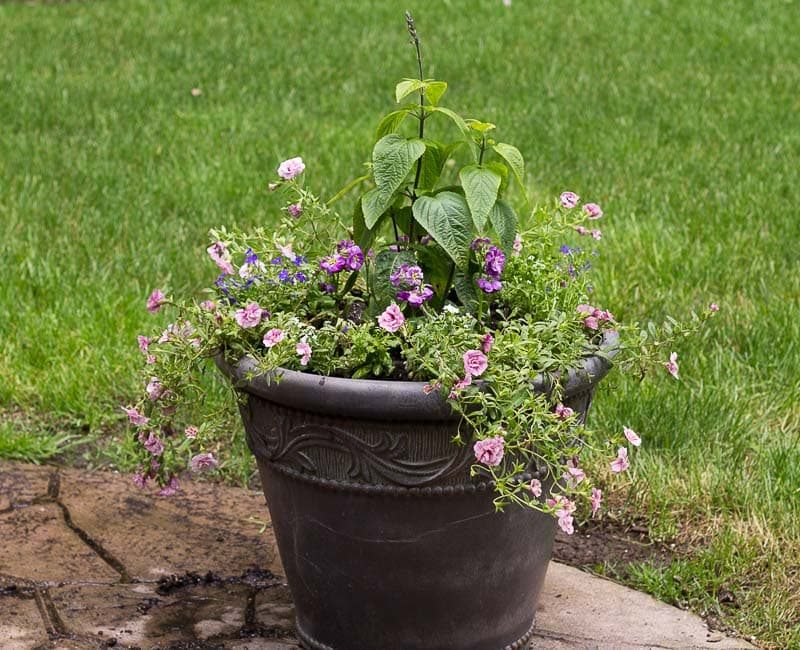 Full Sun Planter Ideas