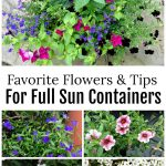 Full sun annual flowers for containers