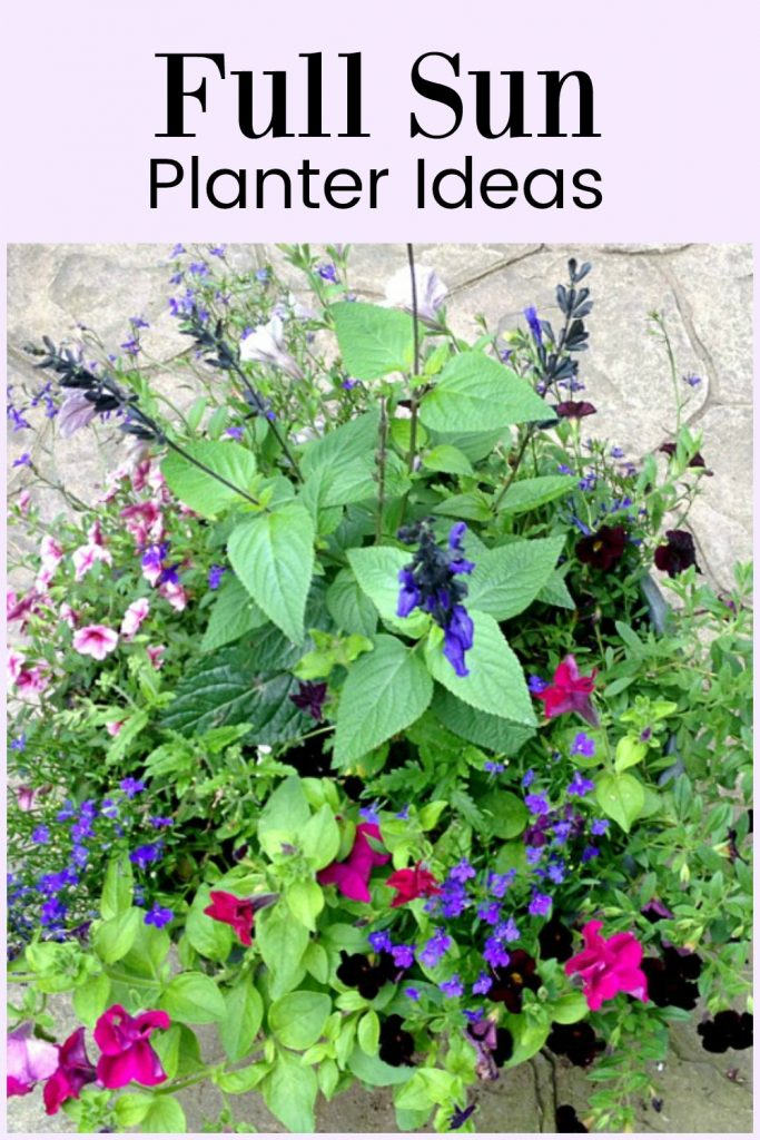 Full Sun Planter Ideas Containers That Will Last All Season Hearth And Vine