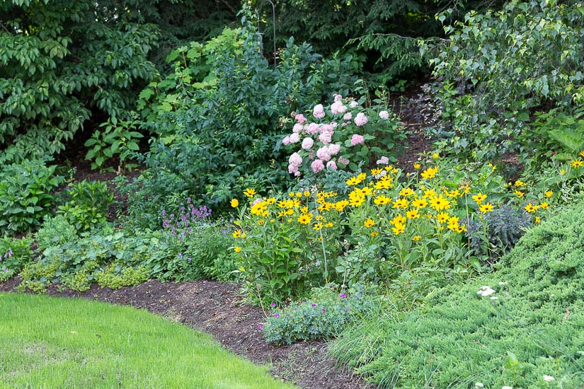 garden pic - 10 summer gardening tips