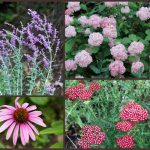 10+ Long Blooming Plants You'll Love