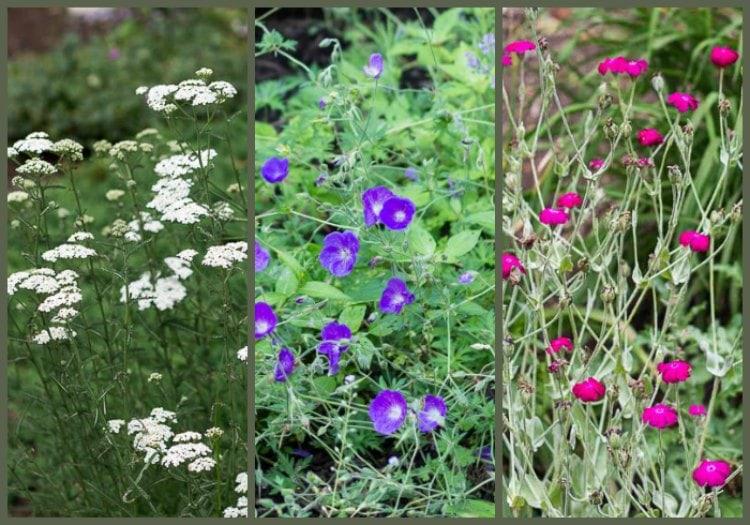 Perennial Flowers That Bloom All Season General Information