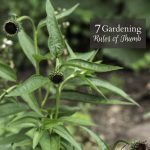 7 Gardening Rules of Thumb