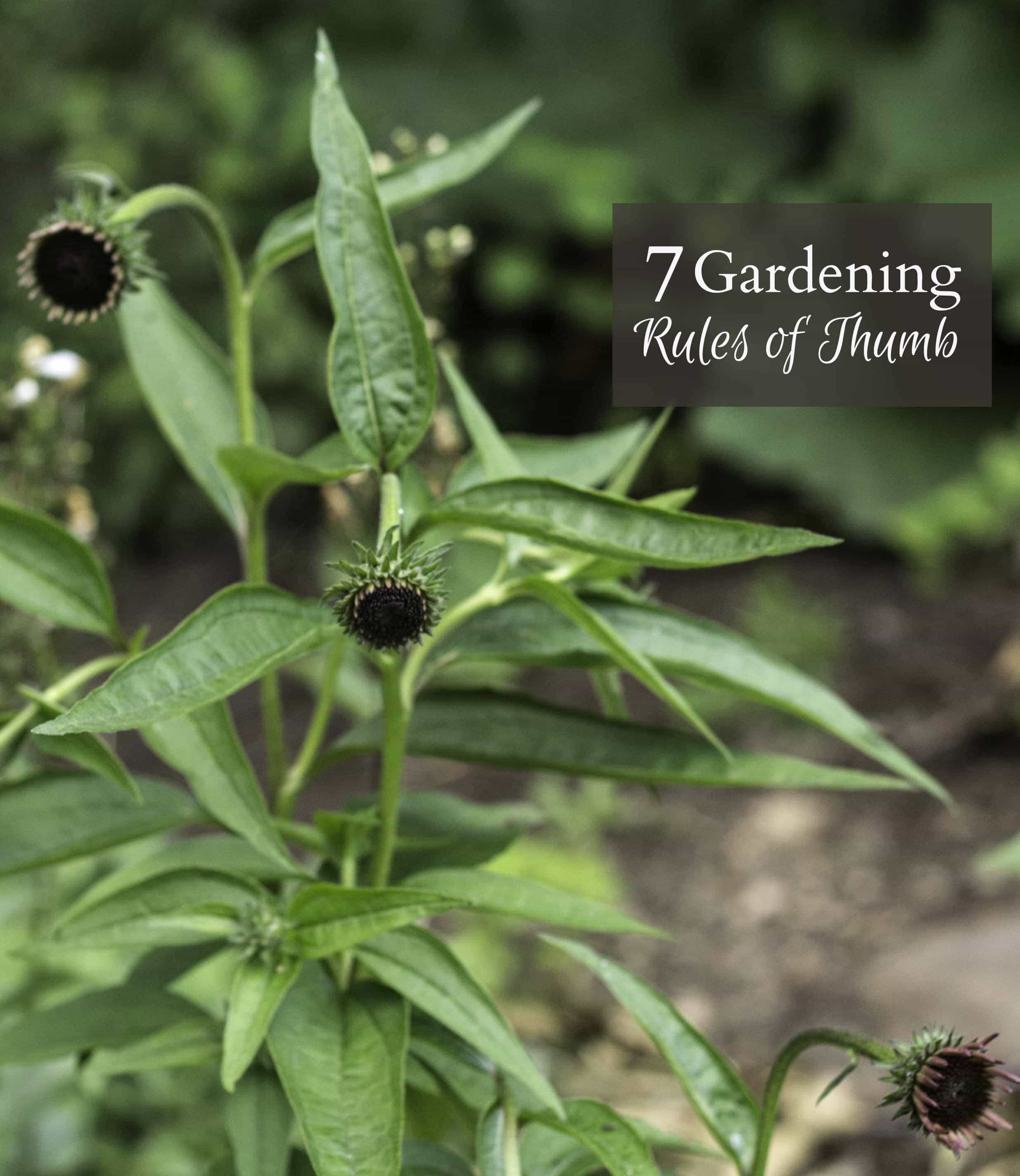 Learn some great tips about gardening rules of thumb, gathered over many years of backyard gardening experience to help you have success in your garden.