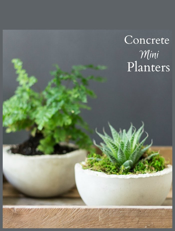 Concrete Mini Planters