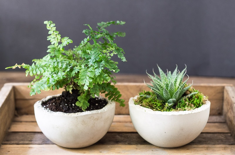 Makers Mix Concrete Mini Planters
