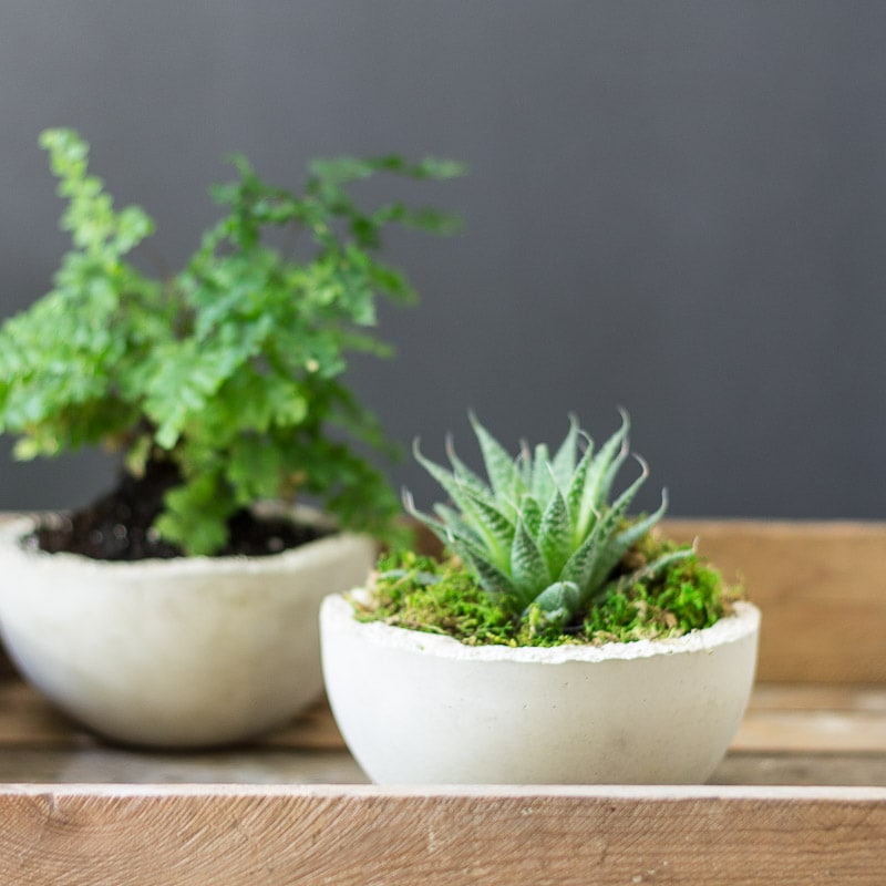 Makers Mix Planters - Makers Mix Pots with plants