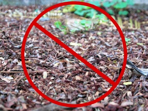 no mulch zone
