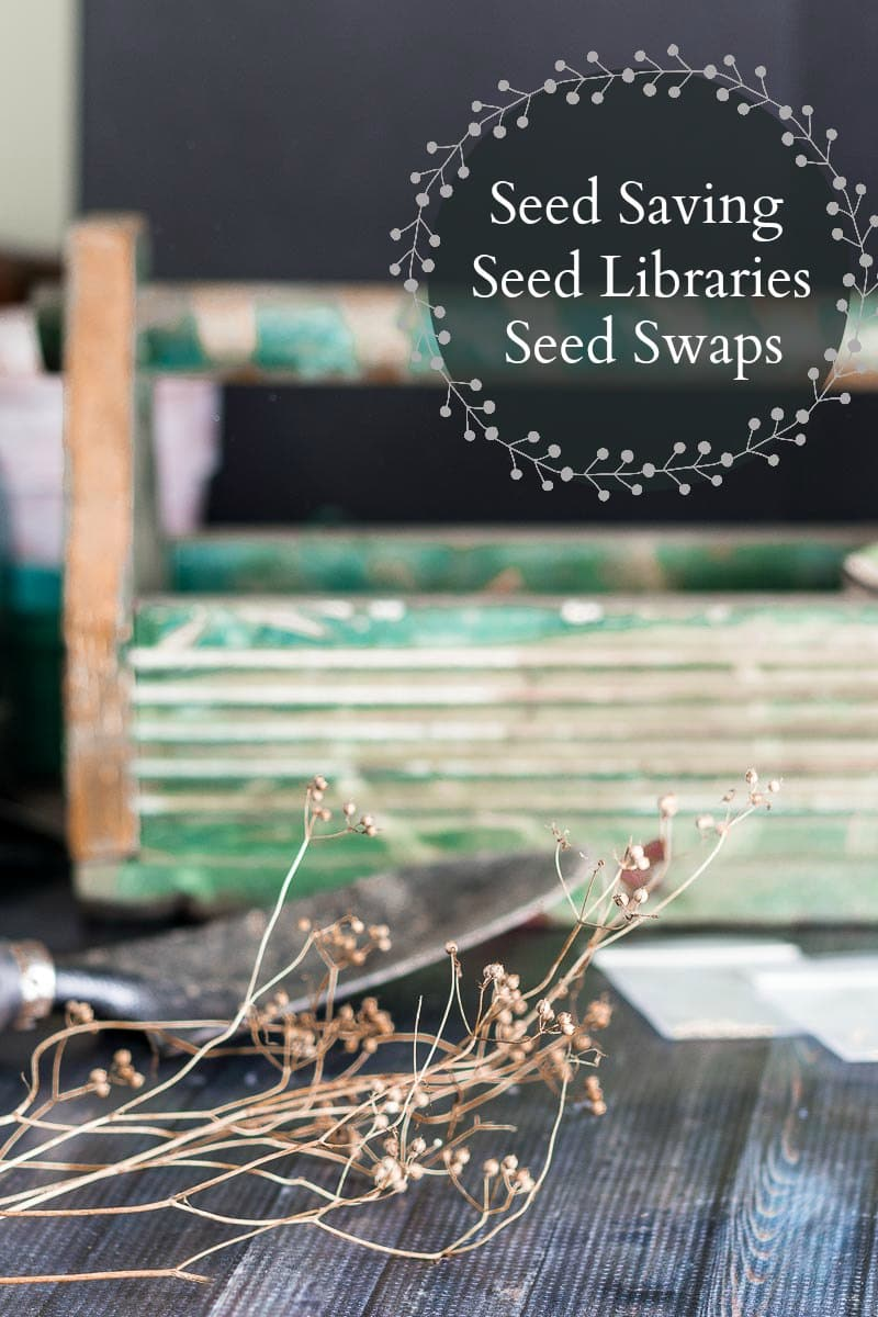 Learn about seed libraries, seed swaps and how to save your own seeds. These are great ways to share your love of gardening and grow your own select seeds.