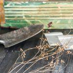 Seed Libraries - corriander seeds