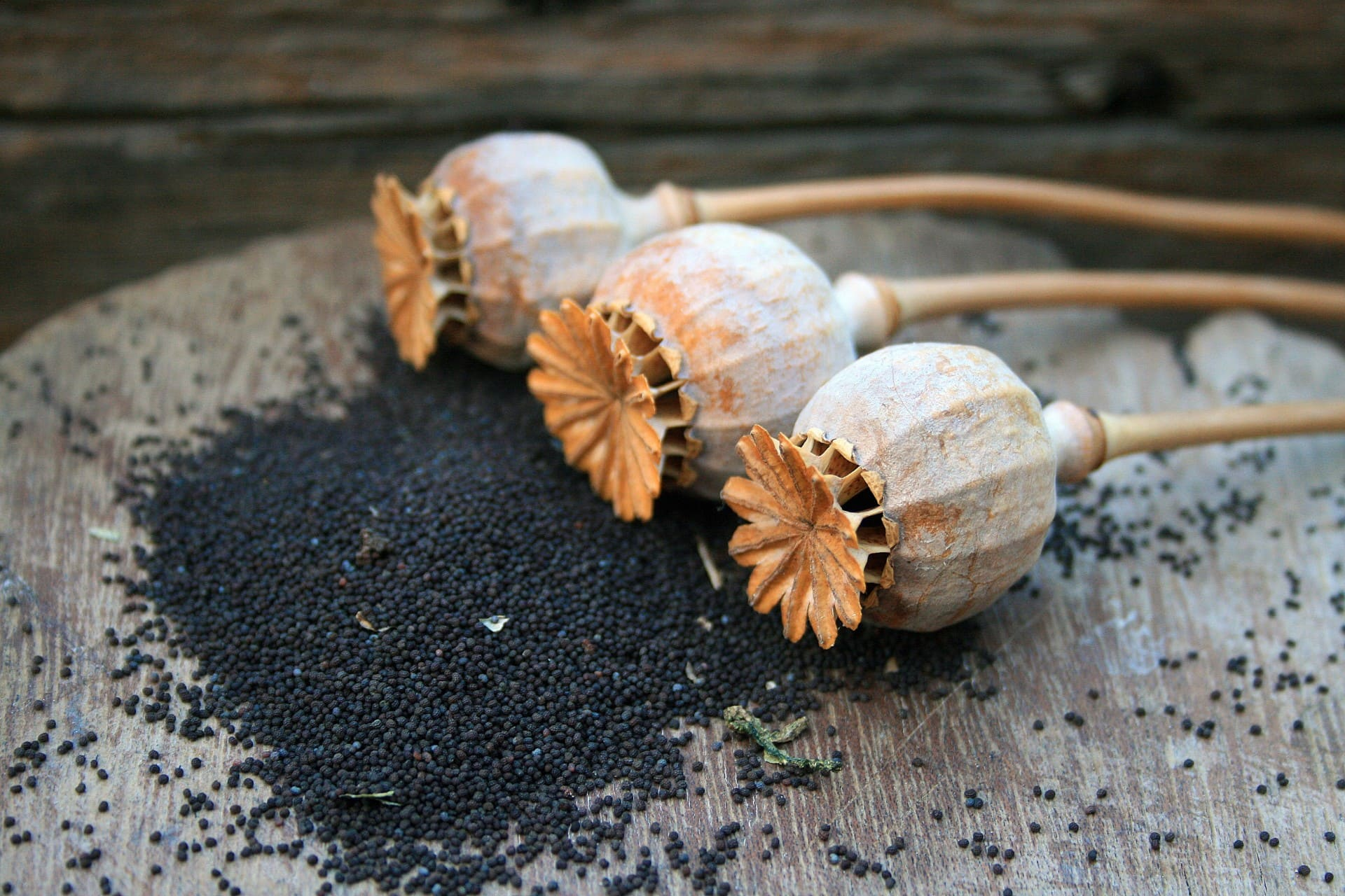 poppy-seed-pods-and-seed