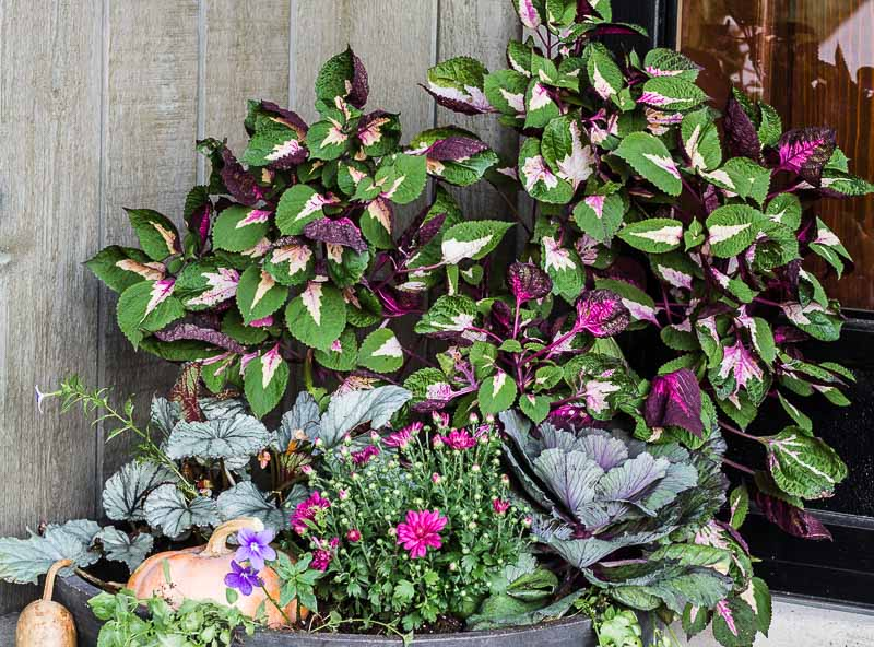 fall-planter-front-porch-makeover