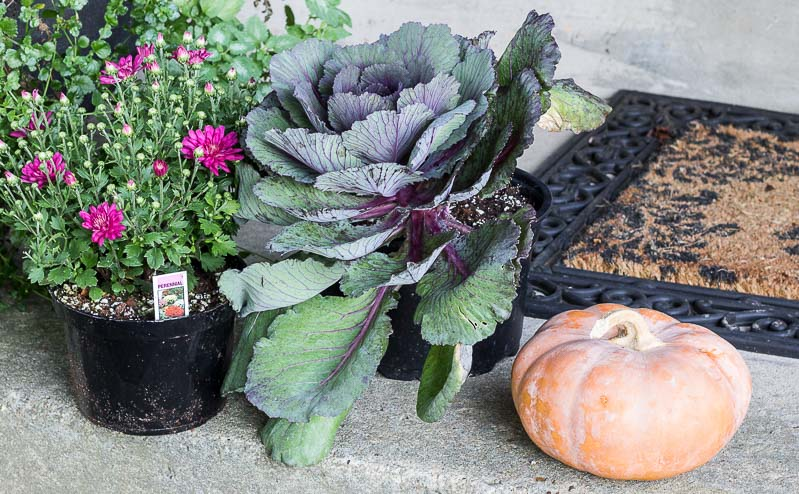 fall-planter-front-porch-new-plants