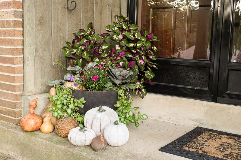 Ideas for Updating Your Fall Planter