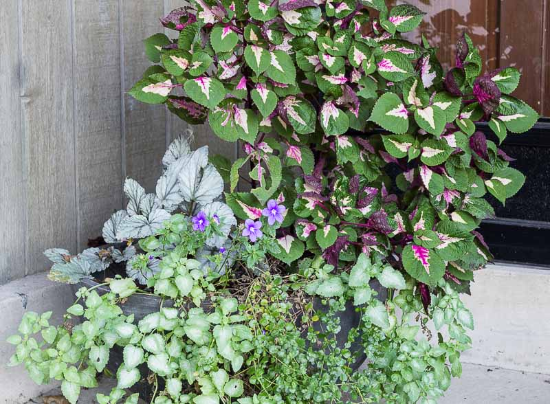 fall-planter-ideas-before