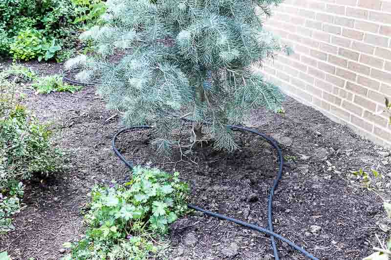 foundation-planting-before-soaker-hose