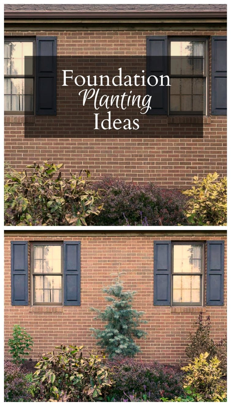 Learn about foundation planting and how to choose the right plants for your home that grow against the house. When the best time to plant and plant care.