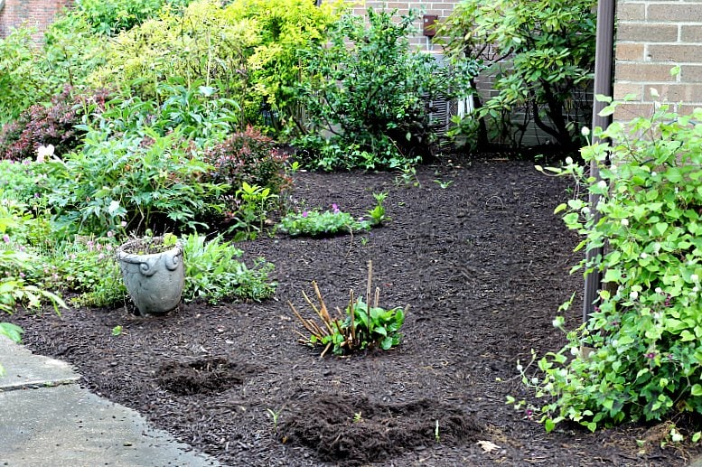 foundation-plants-after-shrubs-removed