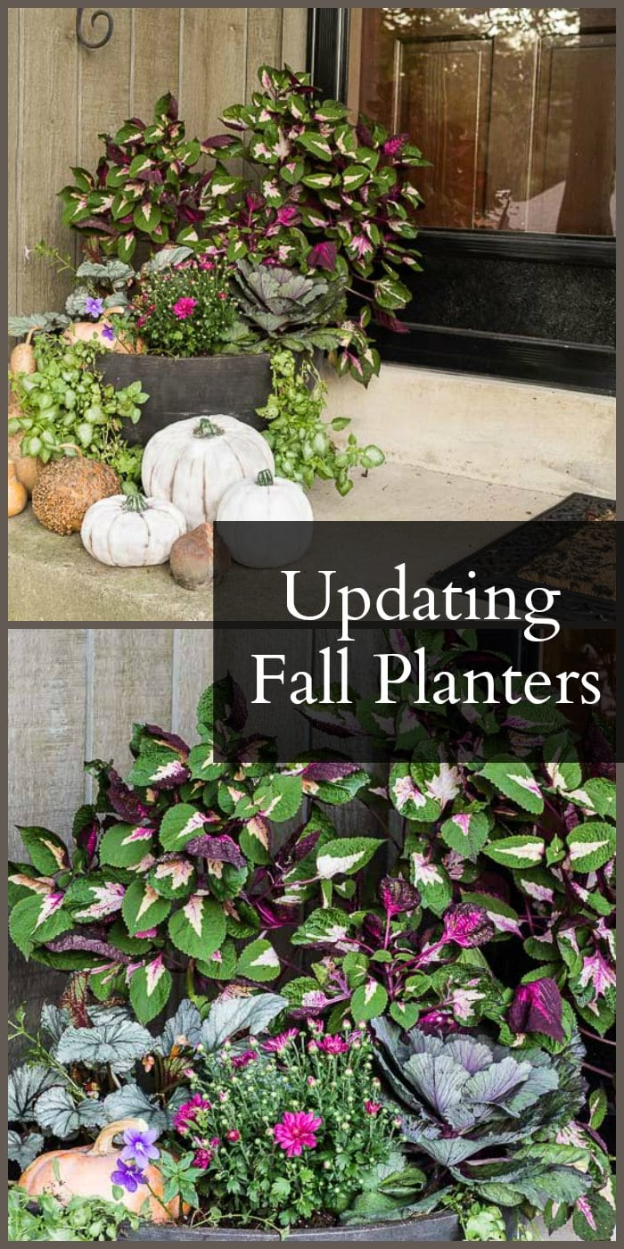 Get ideas for easy and affordable ways to update your fall planter. Using plants still looking good and purchasing a few news ones to freshen up for fall.