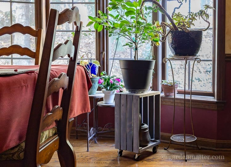 Crate Plant Stand Dining Room