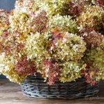 dried-limelight-pee-gee-hydrangea-basket
