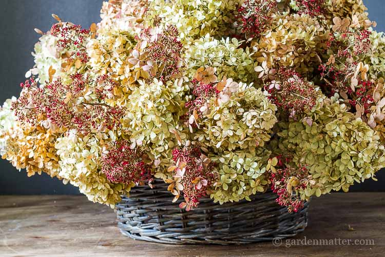 Learn how easy it is to make a dried hydrangea basket from cut blooms a little paint and an old basket. It really adds a nice touch to any decor.