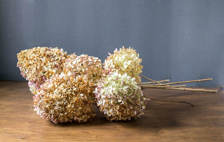 Dried limelight flowers