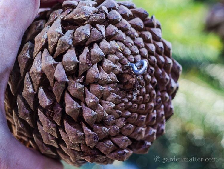 front-door-swag-pine-cone-eye-screw