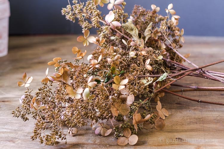 peegee-hydrangea-branch