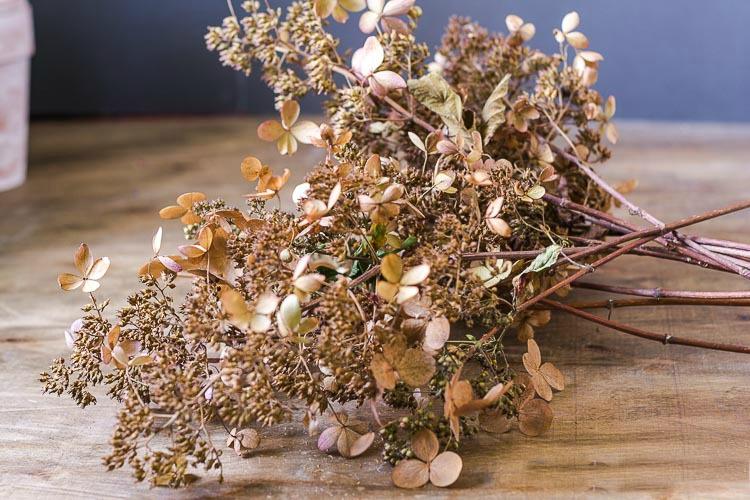 PeeGee dried blooms
