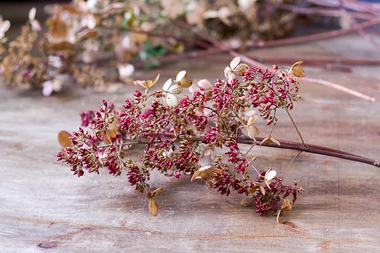 red-hand-painted-hydrangea-branch