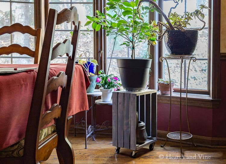 Rolling plant stand in dining room