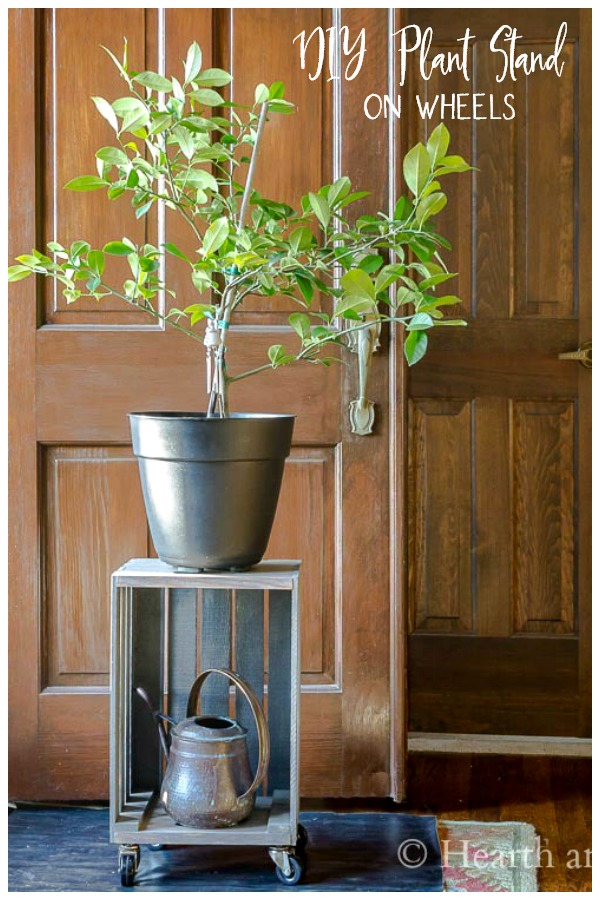 Rolling plant stand crate with lemon tree