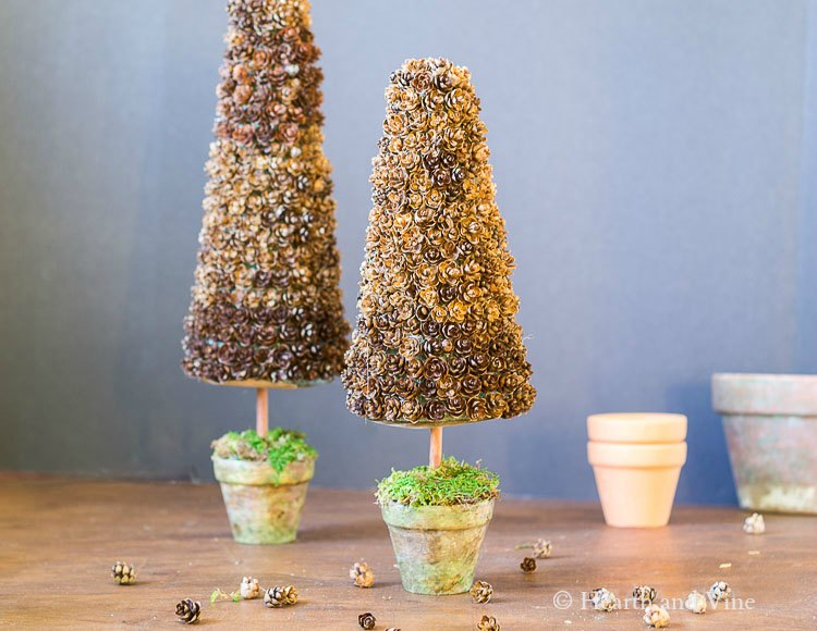 Pine Cone trees with pots