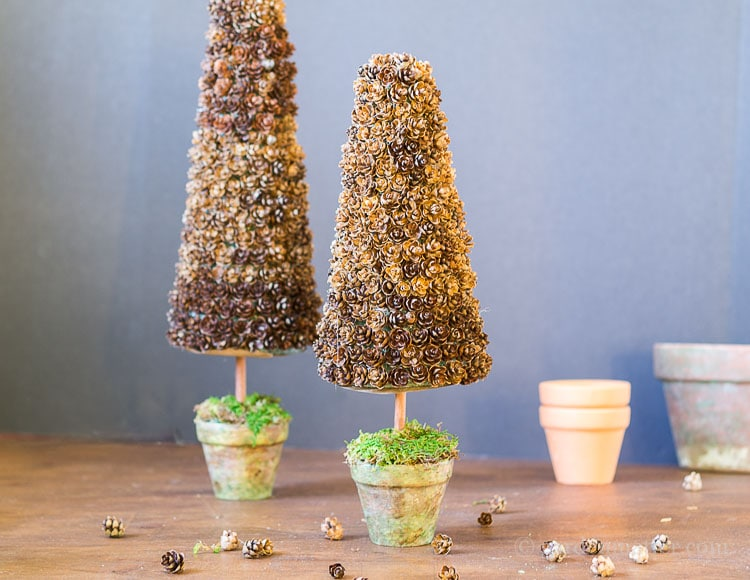 pine-cone-trees-with-pots